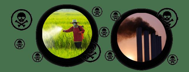 สารพิษจากยาฆ่าแมลง หรือจากโรงงาน
